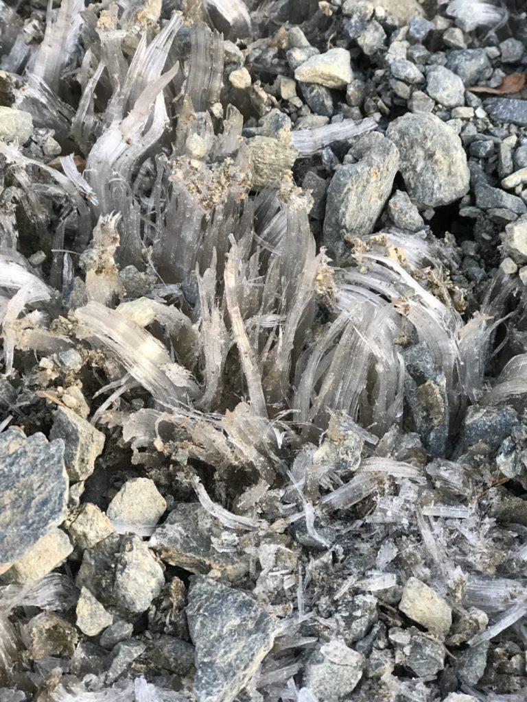 山荘から少し歩いたところのサクサクの霜✨