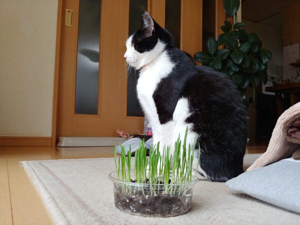 見向きもされないネコ草