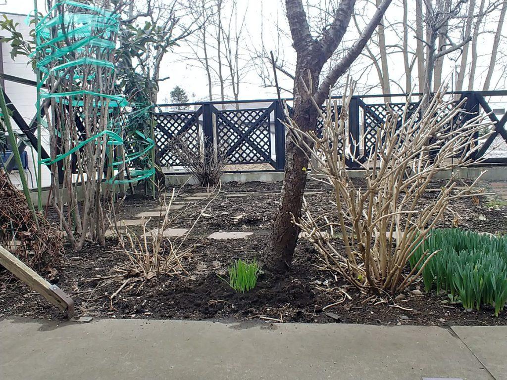 庭に植え替えてみました♪